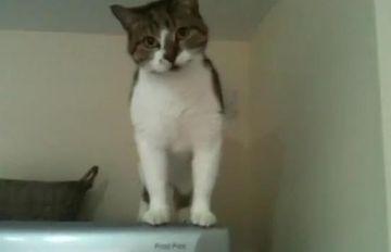 Aceasta pisica e Spidercat! Priviti cum escaladeaza frigiderul VIDEO FUNNY