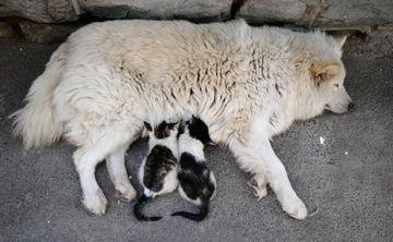Iata o adoptie neobisnuita! GALERIE FOTO