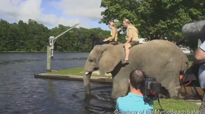 VIDEO IMPRESIONANT cu un elefant orfan care se joaca de mama focului cu cel mai bun prieten al lui, un caine labrador!