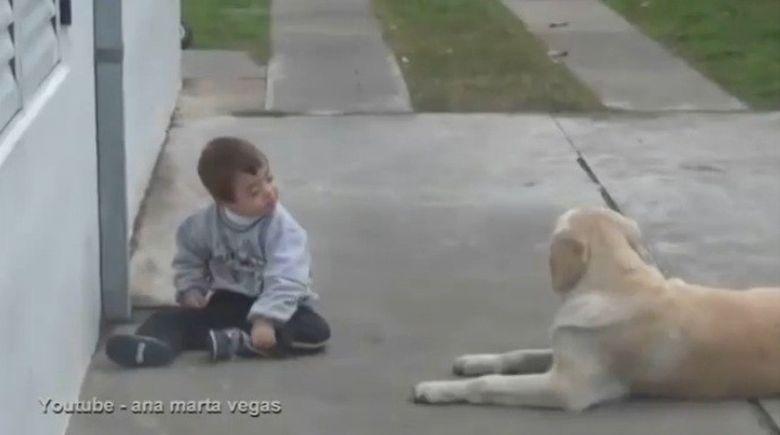 Reactia de milioane a unui caine labrador in preajma unui copil bolnav de sindromul Down!