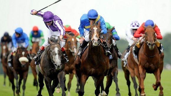 Situatie fara precedent la o cursa de cai! Nu o sa va vina sa credeti ce concurent surpriza a aparut din senin