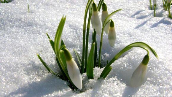 Afla cum va fi vremea de 1 si 8 martie!
