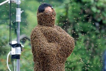 SOCANT. A supravietuit dupa ce a fost ATACATA de un roi de 75 000 de albine ucigase