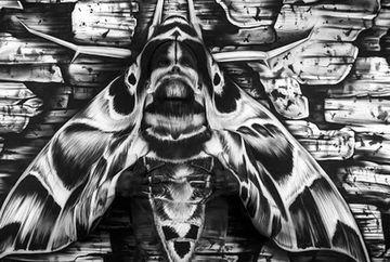 Cea mai tare ILUZIE OPTICA. Ce ascunde trupul acestei molii din imagine?