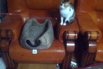 LESINI DE RAS. Nu o sa-ti vina sa crezi ce tovaras de joaca are pisicuta din imagine!