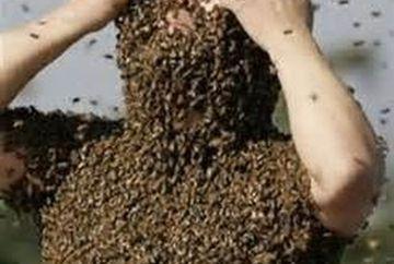 """HALUCINANT! Ce s-a intamplat cu un barbat intepat de 800.000 de albine! """"Trupul lui era..."""""""