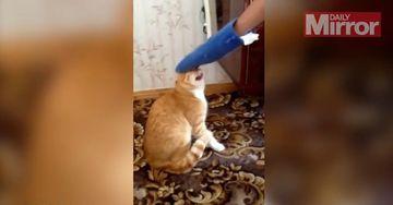 RAZI cu LACRIMI. Pisica asa e nebuna rau de tot! Uite cum reactioneaza daca este mangaiata!
