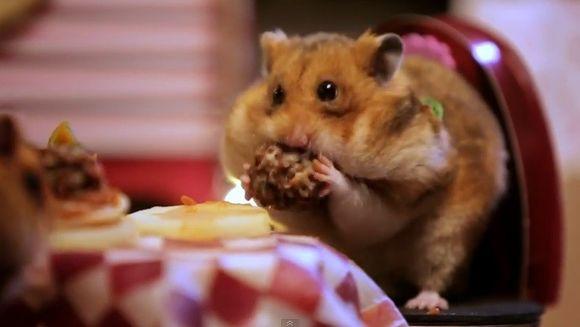 Hamsterul care te va face sa crapi de INVIDIE. Va avea parte de cea mai ROMANTICA cina de Ziua Indragostitilor!