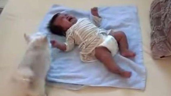 GESTUL INCREDIBIL al acestui caine in momentul in care bebelusul familiei a inceput sa planga! Mama copilului a fost total EMOTIONATA!