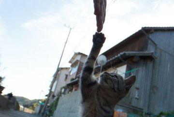 Vrei sa vezi cum arata INSULA PISICILOR si cate feline traiesc aici? GELERIE FOTO impresionanta
