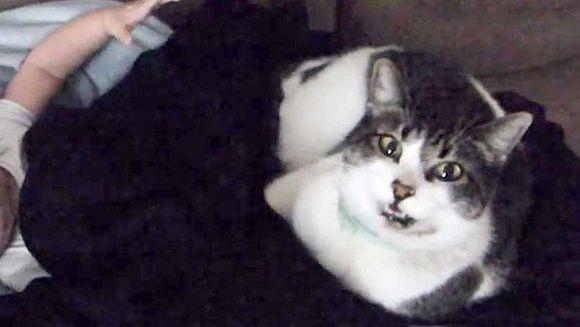 REACTIA de milioane a unui bebelus de cateva saptamani cand este sculat din somn de pisica familiei!