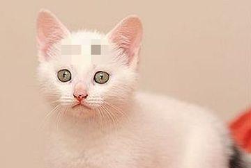 Toti incep sa rada cand vad acest pui de pisica! Uite ce detaliu ascunde fruntea lui. E 100% real