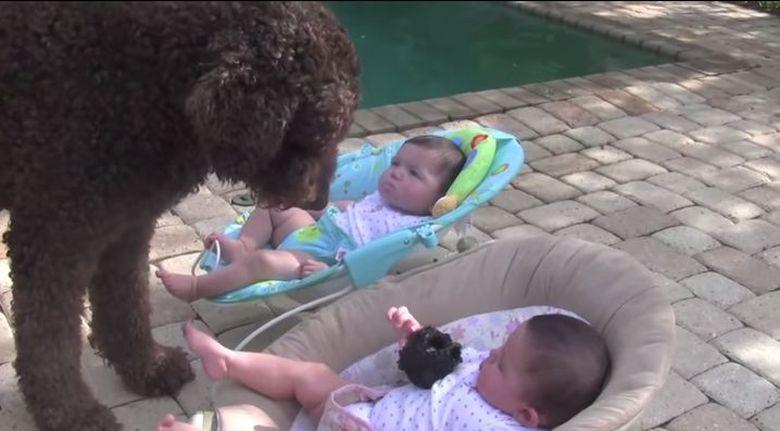 Un caine s-a apropiat de doi bebelusi gemeni, lasati pe marginea unei piscine. Ce s-a intamplat apoi a facut-o pe mama sa alerge dupa telefonul mobil