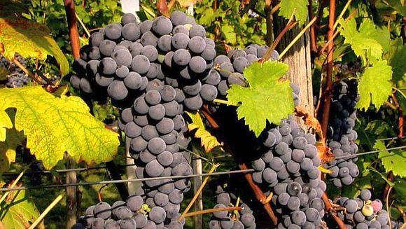 Casa Panciu, evaluata si premiata cu distinctii internationale de catre specialisti oenologi, in cadrul concursului international Decanter World Wine Awards