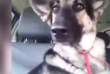 A dat drumul la radio in masina in care se afla cainele familiei! E dementiala reactia patrupedului