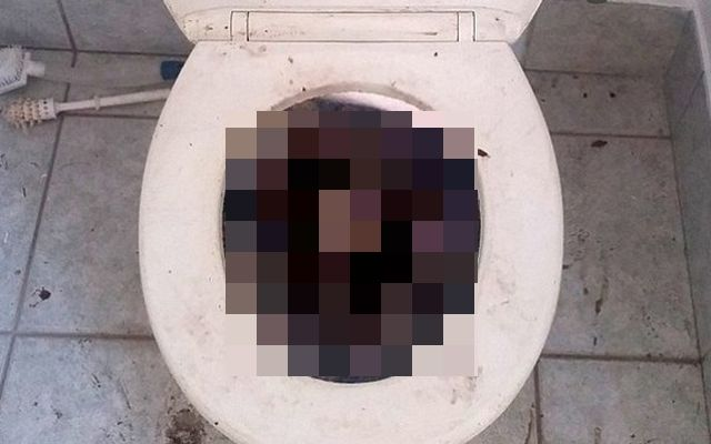 A intrat in baie, dar cand a vazut ce e in vasul de toaleta a inceput sa tipe! A sunat imediat dupa ajutoare