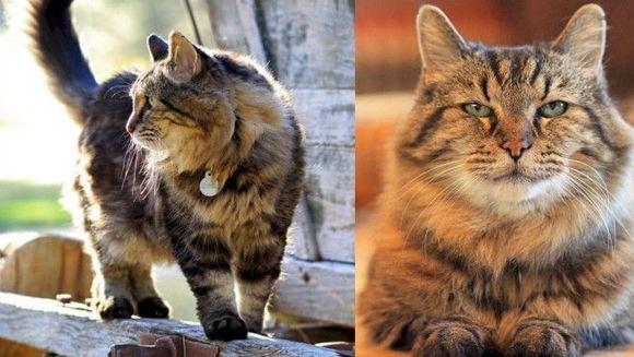 """Aceasta e cea mai batrana pisica din lume! Cei care afla cati ani a implinit isi fac cruce! """"Dumnezeule, nu stiam ca pisicile traiesc atat!"""""""