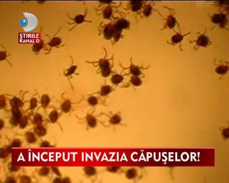 ALARMA! Invazie de capuse in mai multe judete din tara VIDEO