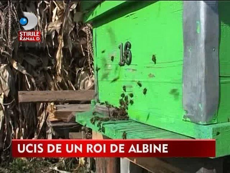 TRAGEDIE intr-un sat din judetul Vaslui! Un barbat A FOST OMORAT de un roi de albine VIDEO