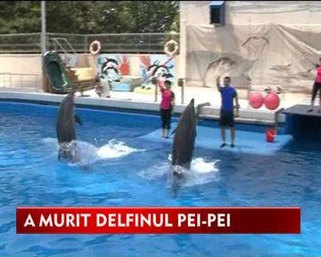 Veste trista! Pei-Pei, delfinul care a facut copii sa zambeasca timp de trei ani, a murit VIDEO
