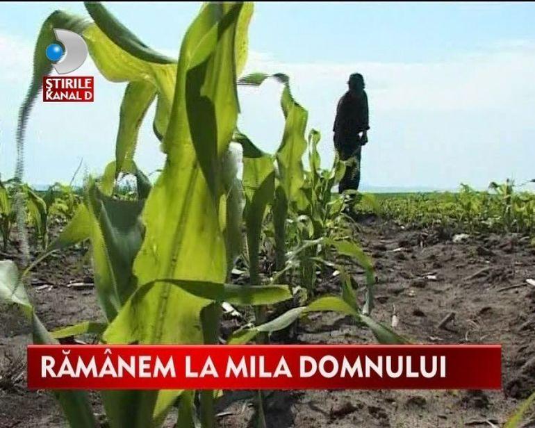 SISTEMUL de IRIGATII, la pamant! Ce vor face agricultorii in cele doua luni de seceta care vor urma VIDEO