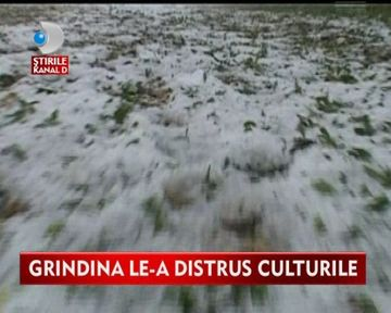 Furtunile si ploile cu grindina AU DISTRUS culturile agricultorilor VIDEO