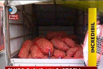 INCREDIBIL! Un sat de romi a refuzat ajutoarele de la Stat. Au vrut CARNE in loc de cartofi VIDEO