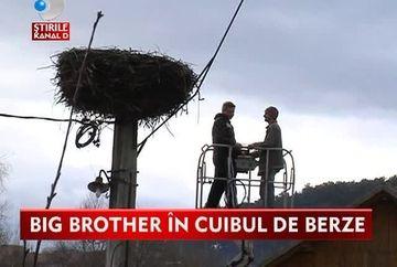Big Brother in cuib! Berzele din judetul Covasna vor fi monitorizate cu camere de supraveghere montate deasupra cuiburilor VIDEO