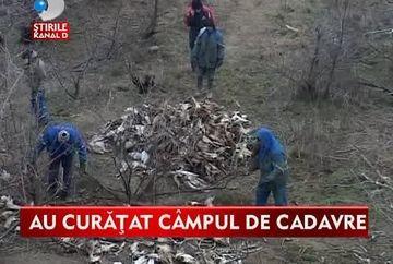 Galati: Zona in care au fost gasite SUTE DE CADAVRE de cai a inceput sa fie curatata. Autoritatile incearca sa afle cine a fost autorul MACELULUI VIDEO