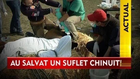 Au salvat un suflet chinuit! Un batran a vrut sa ii taie picioarele unui cal cu toporul VIDEO