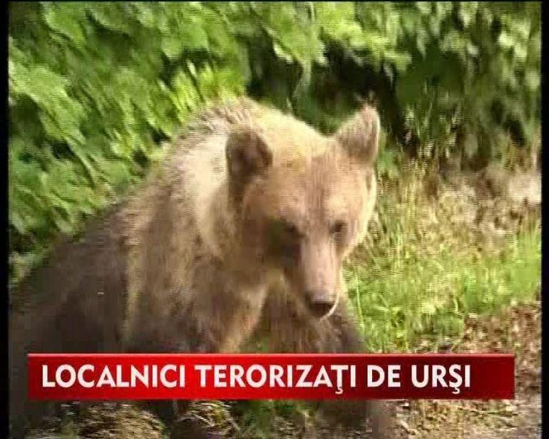 Victimele ursului ucigas, suspecte de braconaj VIDEO