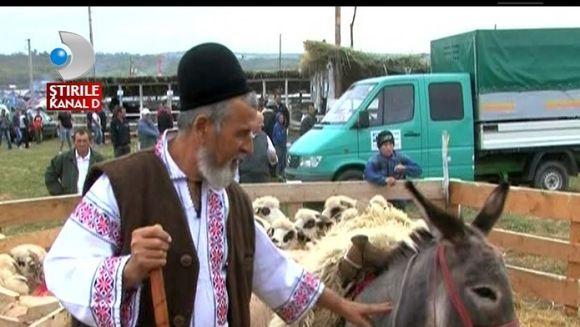 Fermierii din Vaslui si-au expus animalele de soi in cadrul unui festival cu traditie VIDEO
