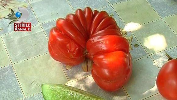 Seceta a modificat genetic legumele cultivate de tarani VIDEO