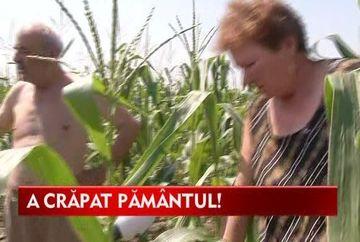 Culturile agricole, in pericol din cauza secetei! VIDEO