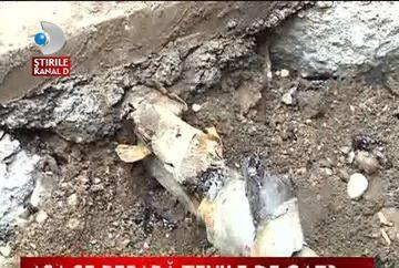 Baia Mare, in pericol de explozie VIDEO