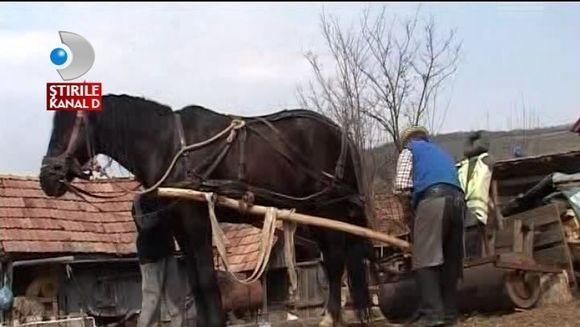 Tavalugul tras de cal, o inventie a unui agricultor roman VIDEO