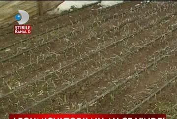 Prapad in agricultura! Sute de hectare de sere, complet distruse VIDEO