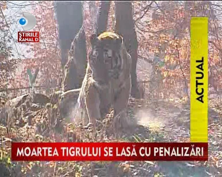 Impuscarea tigrului a insemnat demiterea conducerii gradinii zoologice din Sibiu. Vezi declaratia primarului Klaus Johannis VIDEO