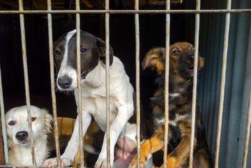 Protest impotriva eutanasierii cainilor fara stapan la sediul Curtii Constitutionale