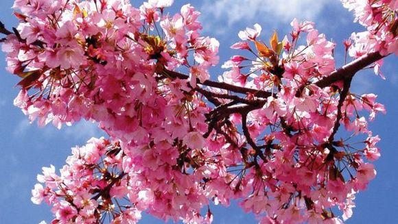 PROGNOZA METEO: Iata cum va fi vremea pana pe 30 martie
