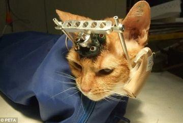 Doamne Fereste! Motivul HALUCINANT pentru care pisicutele astea au fost desfigurate!
