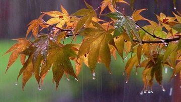 Ploi in aproape toata tara, duminica si luni