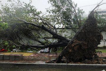COD GALBEN de vant puternic in Capitala: Peste 30 de copaci doborati, 14 masini avariate, panouri publicitare cazute