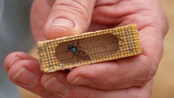 A luat o albina, a bagat-o intr-o cutie si apoi si-a pus-o la gat! E uluitor ce s-a intamplat cu acest barbat la scurt timp dupa ce a facut ASTA