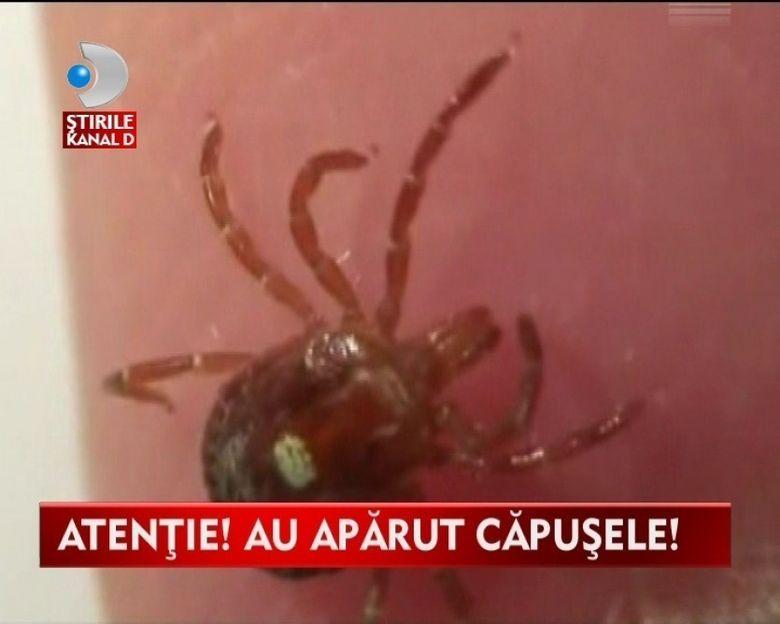 TEROAREA CAPUSELOR! Romania din nou ATACATA de paraziti VIDEO