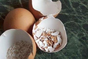 Uite de ce sa nu mai arunci niciodata cojile de oua! Fac minuni pentru tine!