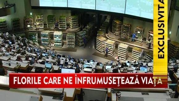 CEA MAI MARE LICITATIE de flori din lume! Bursa din Olanda VIDEO