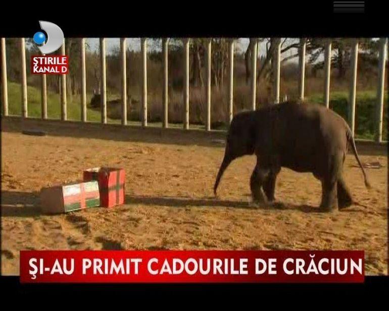 Si elefantii sarbatoresc Craciunul! VIDEO