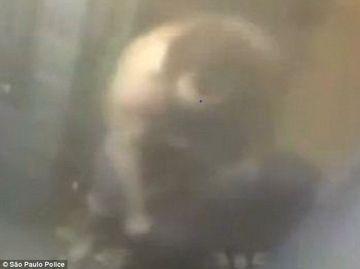 VIDEO MACABRU! Ce tara un barbat intr-o valiza pe care vroia s-o arunce la gunoi