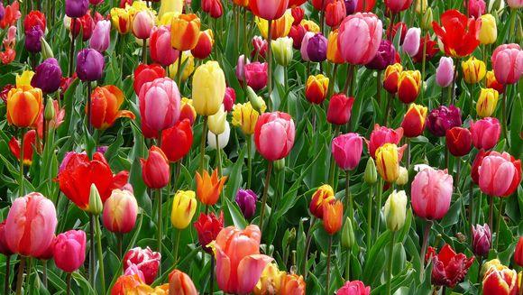 Horoscop WEEKEND 1-3 martie 2019. Primul weekend de primăvară este SPECIAL şi înainte de Luna Nouă! Care e NOUTATEA pentru zodia ta